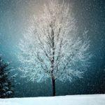 雪と木 サイズ変更