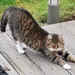 猫のストレッチ