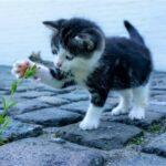 子猫と小さな野の花