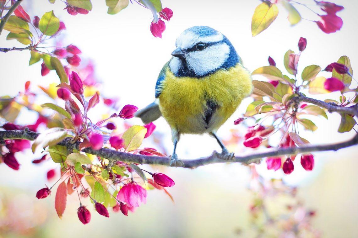 春の訪れと鳥