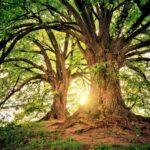 大きな木が2本