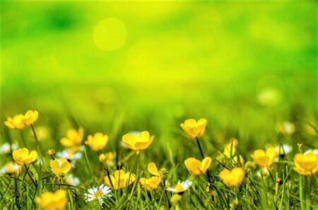 野に咲く黄色い花
