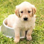 エサ鉢に入る子犬