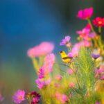 花畑と小鳥