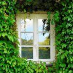 窓にツタの葉