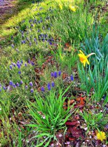 川べりの野花たち