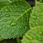 雨粒と葉っぱ