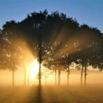 朝陽と木のシルエット