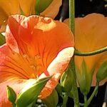 庭のオレンジの花