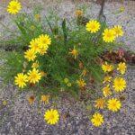 真夏のアスファルトに咲く花